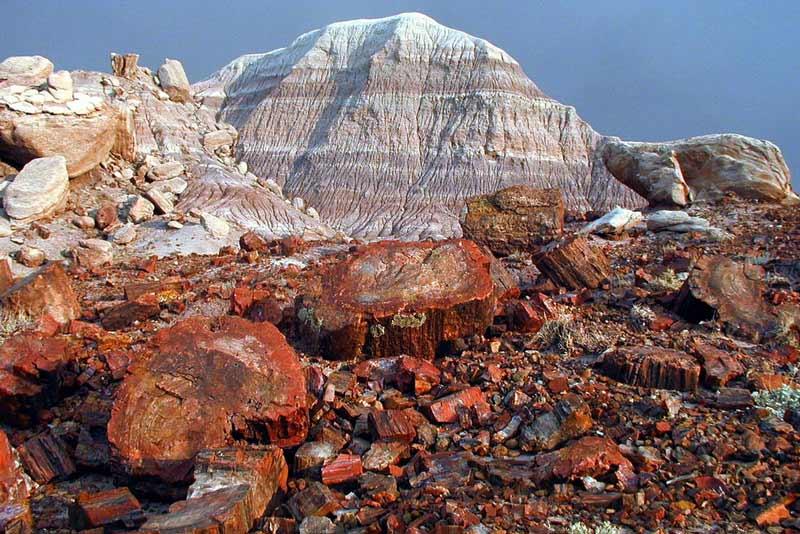 Gỗ hóa thạch là gì?